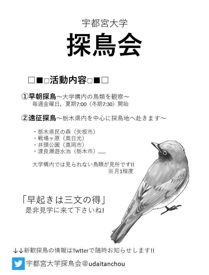 探鳥会のビラ